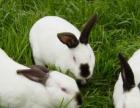 萧县世纪兔业常年出售獭兔种兔、养兔设备