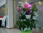 室内外绿化及养护