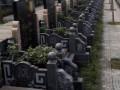 北碚莲界公墓陵园