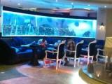 海洋生物水族馆主题展览-洋清水族-海洋生物海洋展租赁