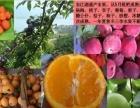 郴州东江湖清江水果