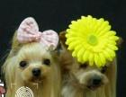 威海宠物美容师培训权威机构,宠物美容师在实践中学习