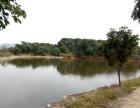 诏安县城周边68亩综合果园出租,土地出租,园林出租