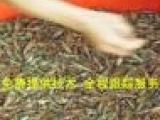 小龙虾苗养殖技术免费指导 包回收 包成活 小龙虾价格