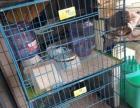 双层猫笼子(可变单层)带托盘