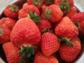 市区内的草莓园文亮无公害草莓采摘园,可以采到6月
