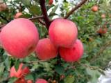 秋游平谷石林峡一日游价格 去平谷石林峡采摘苹果一日游电话