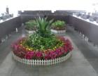 绍兴办公室盆花绿植租赁(专业 用心 实惠)