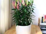 武汉办公室绿化租摆家庭花卉租赁,武汉室内植物出租绿色植物价格