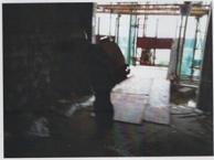 石龙白蚁防治,石碣白蚁防治所,常平防治白蚁,东莞白蚁防治协会
