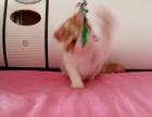 加菲猫小公子