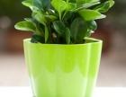 锦江区绿植花卉租售,立体植物景观 绿植墙,园林绿化,私家花园