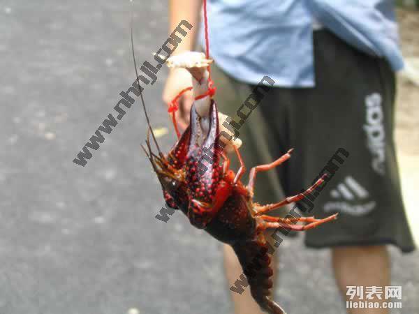 上海农家乐旅游 采葡萄西瓜掰玉米 钓龙虾游滴水湖 看海