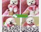 重庆哪里有小狗卖 重庆哈士奇图片 重庆宠物市场