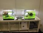 专业维修鱼缸 鱼缸地柜维修 鱼缸水泵维修 加氧泵维修