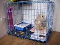 音译猫狗兔家庭寄养10元起上门接送随机空运!