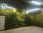 仿真绿植 仿真藤蔓 工地围挡装饰 仿真植物墙