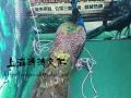 创意百鸟展出租生态百鸟园布展价格鹦鹉才艺表演租赁