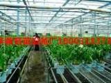 河北供应 花卉育苗床,苗床网 价格合理质量保证