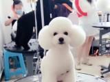 北京學寵物美容培訓需要多久呢