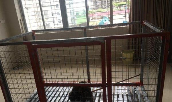 出售一个自家做的狗笼,