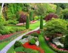专业承包小区、单位园林养护/绿植养护