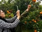 上海农家乐一日游 采桔子摘猕猴桃 钓鱼钓大闸蟹 享田园乐趣