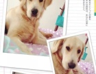 家庭式宠物寄养,热爱狗狗,24小时保护您的爱犬