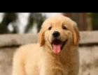浑南新区家庭式宠物寄养中心