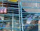 低价出售鹩哥小绯胸鹦鹉