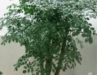 室内绿植租摆 室内植物销售 室内植物出租 室内植物租赁