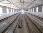 全套蛋鸡养鸡设备低价出售