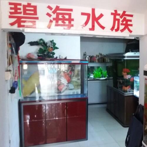南京江宁热带鱼,金鱼锦鲤销售配送