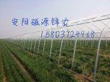 安阳磁源锦农温室大棚有限公司