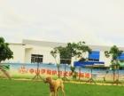 中山伊甸护卫犬训练基地专业训犬,优质的服务!