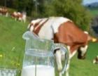全市配送,批发团购常低温牛奶 ,欢迎广大朋友咨询