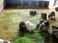 金龟药材刺猬养殖批发加盟 种植养殖