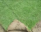 北京崇文丹麦草种植 出售完善的售后服务