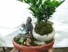 流星花卉批发市场~专业批发各种绿植盆栽花卉,花盆