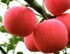 供应陕西山地苹果