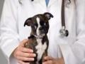 宠物医院、宠物医疗、宠物疾病,服务好、口碑好、