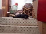 一只黑色的流浪狗