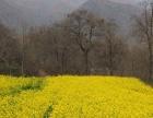 定王陵风景区体验农村山区的生活