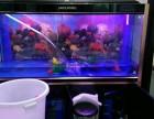 深圳市承接家庭办公室清洗鱼缸