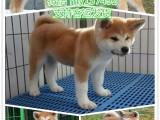 苏州宠物领养中心 苏州免费赠送宠物 苏州哪里有宠物狗卖