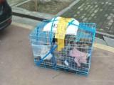 长沙岳麓托运一只狗需要多少钱