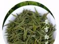 安吉白茶 原产地直销