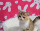 1千1只 加菲猫 支持抱窝