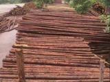 雄县园林绿化木杆绿化杆