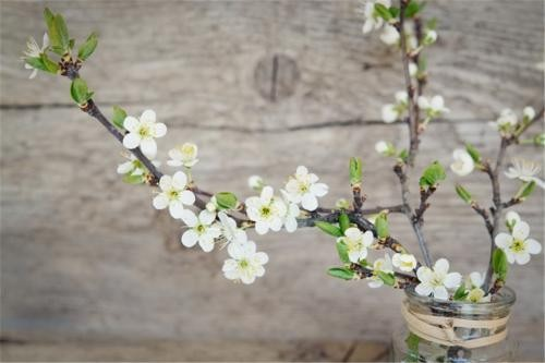 上海专业的花艺培训学校?
